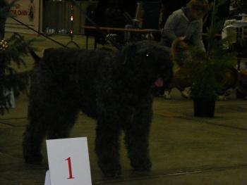 Elsa Dog Show Décembre 2009